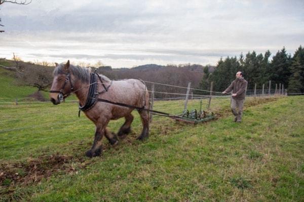 Découverte du cheval dans les champs