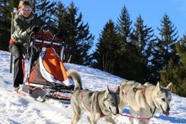 Conduite d'un attelage d'huskies de Sibérie