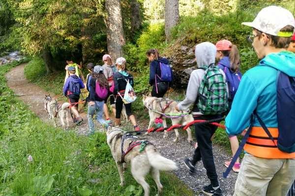 Cani-randonnée dans les Alpes avec un chien nordique