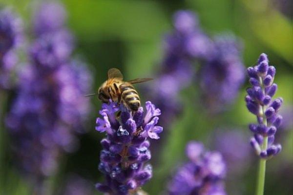 Decouverte ou formation apiculture en provence